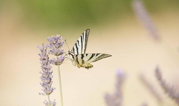 Flora und Fauna 14