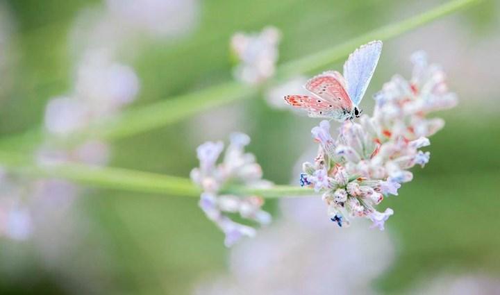 Flora & Fauna 6