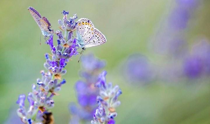 Flora und Fauna 10