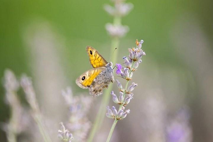 Flora i Fauna 8
