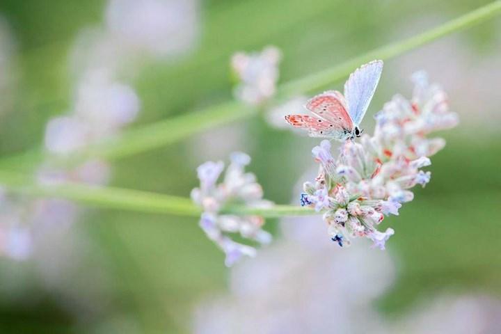Flora i Fauna 7