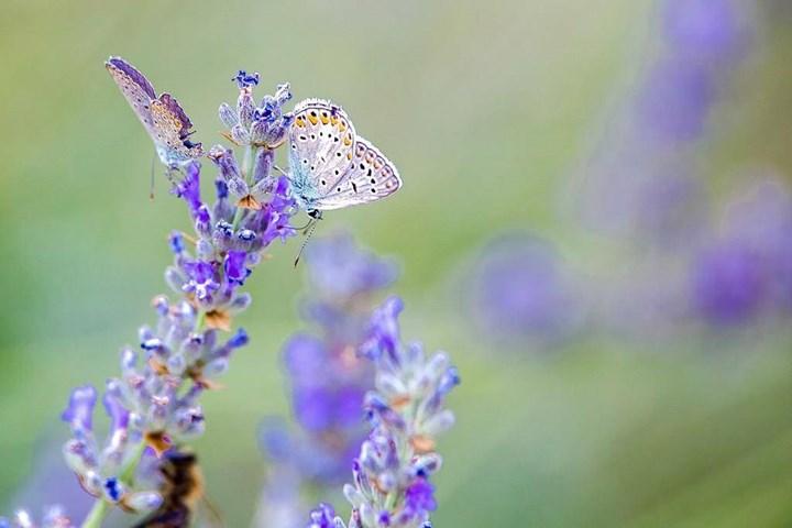Flora i Fauna 10